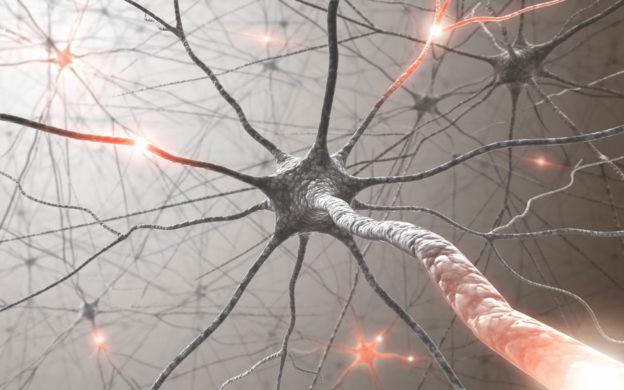 Foto ilustrativa de um neurônio